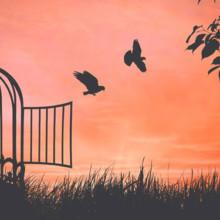 Libertà ed essere liberi: cosa significa davvero!