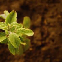 Bisogno di crescere perché è utile e come coltivarlo al meglio
